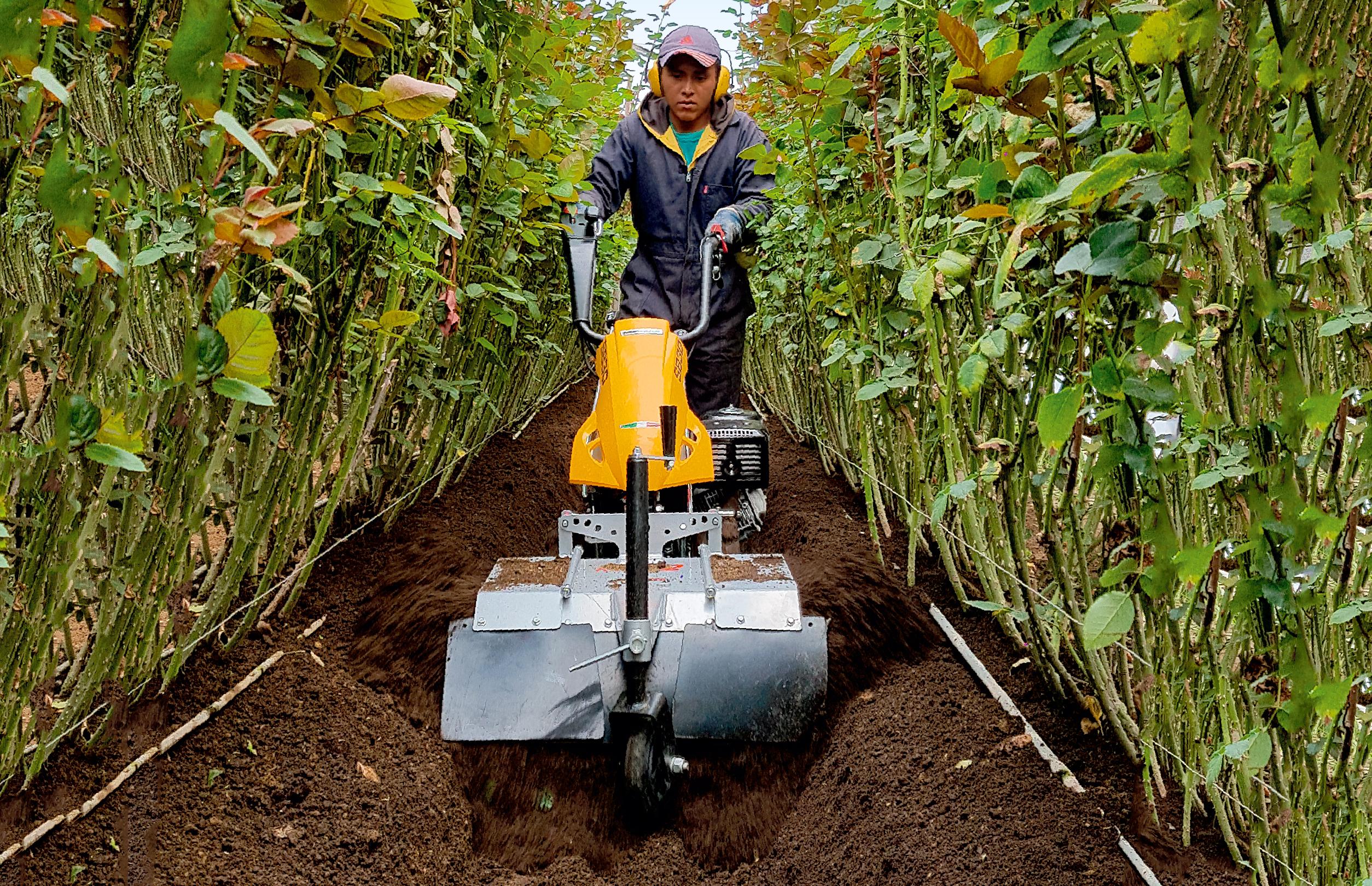 ridge-2-aporcador-cultivo-rosas-ecuador
